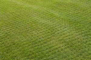 lawn aeration and drainage