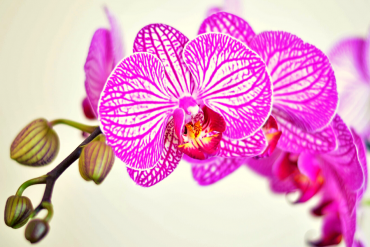 types of orchids to grow in spring